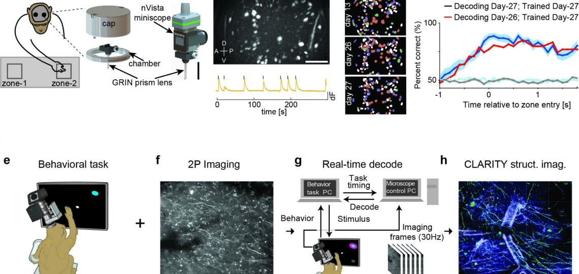 Two breakthrough approaches to calcium imaging and BCI in NHP.