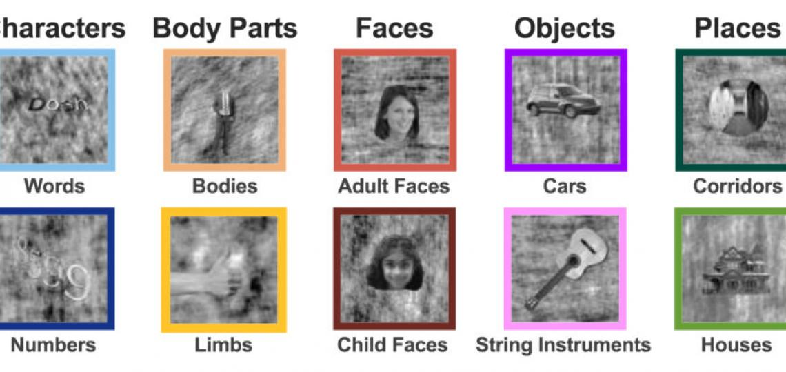 Sample images that were used to test brain responses in children such as words, bodies, cars, houses