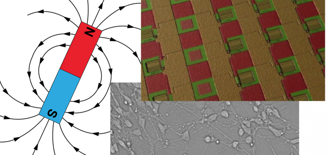 Illustration of how an array of magnetic sensors could be used to record and stimulate the activity of neuronal cells