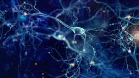 Illustration of neurons in the brain
