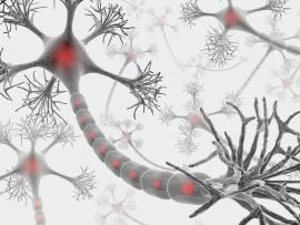 Illustration of a neuron extending a growth cone
