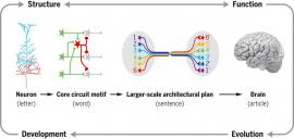 Visual abstract showing levels of organization of brain circuits
