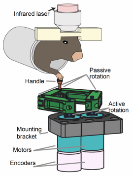 Illustration of a mouse operating a robotic lever while researchers image the activity of neurons in its brain