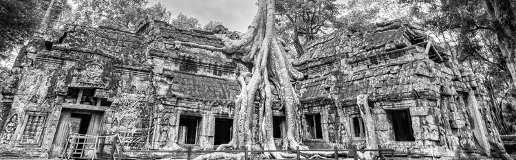 Tree roots emerging from ancient ruin